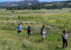 LPHS student researchers in the Gallatin Range – Daly Creek – left to right Michael, Evan, Jackson and Brooke. PHOTO BY RICK & SUSIE GRAETZ, UNIVERSITY OF MONTANA